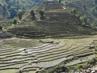 Muong Hoa River Valley Rice Terracing