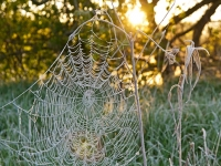 Frosty Spider Web