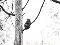 Lounging Squirrel