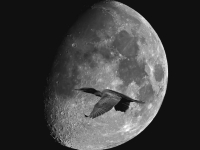 The Moon And The Cormorant