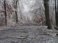 Ice Storm Damage