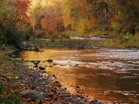 Fall On The Creek