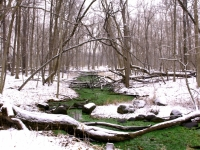 Silver Springs In Winter