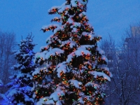 Anchorage Christmas Tree