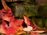 Nestled Autumn Leaves