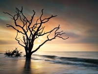 Re: Boneyard Sunrise - Botany Bay, Edisto Island