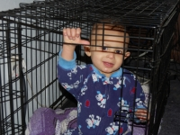 Carmello Playing In Dog Crate