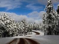 Winter In Pinetop
