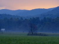 Early Morning Life In Cades Cove.