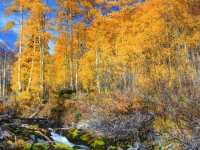 Aspens By Maroon Creek