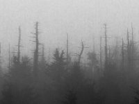 Clingman's Dome Fog