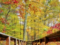 Pathway To The Bliss Of Autumn