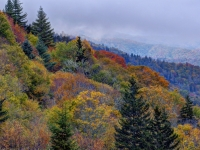 Seasons Of The Great Smoky Mountains