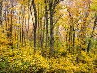 Western Nc Fall Foliage - The Forest For The Trees