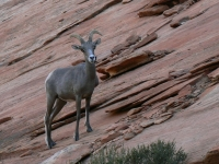 Zion Park Sentry