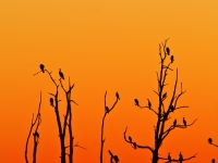 Birds In Dead Trees