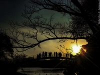 Sunset And Silhouettes In Ibirapuera Park.