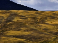Grasslands Of The Chilcotin