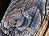 Frost On Wood