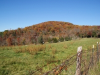 Blue Ridge Mountain Meadow