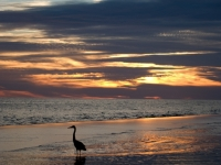 Heron And Heart Cloud At Sunset