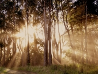 Molokai Sunset