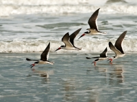 Five Skimmers