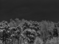 View Of Snow On The Forest With Dark Background