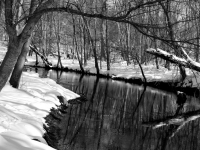 Winter Creek In Snow (b&w)