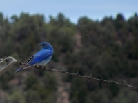 Mr. Blue Bird
