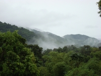 The Rainforest Of Trinidad