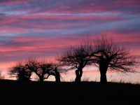 Sunset And Apple Trees
