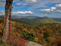 Shenandoah Fall Foliage - Oct 2008