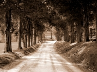 Tree Lined Country Road (sepia)