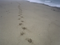 Tracks In The Sand, Cape Cod