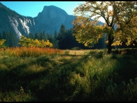 Yosemite Meadow At Sunrise Over Half Dome Shoulder