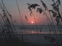 Sunrise Through Sea Oats