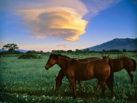 Horses And Lenticular Cloud At Sunset