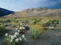 Spring In Death Valley, National Park