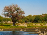 Tree By The River Nile-egypt