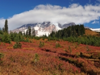 Fall Cloud On Rainier