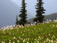 Hurricane Ridge, Olympic N.p.