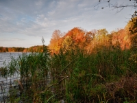 Fall, Trees, Reeds, Reservoir, Water, Sky, Clouds, Hdr