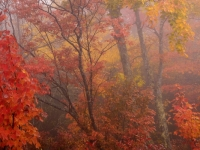 Autumn Forest, Blue Ridge Parkway