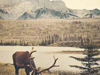 Jasper National Park-Icefield Parkway