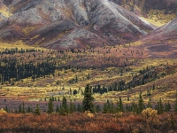 Colors Of Denali