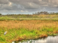 Everglades Hdr3