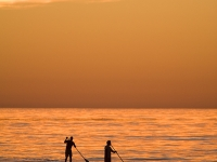 Paddleboard Sunset