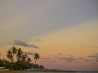 Coconut Trees And Sunset
