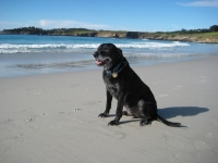 Dogs Love Carmel Beach